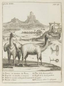 Représentation de Lamas et des instruments des mines du Pérou